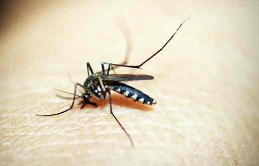 Malaria in Marathi information